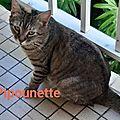 Pipounette
