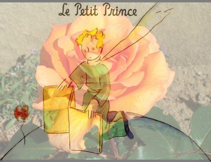 Petit Prince et sa Rose2