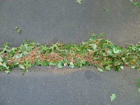 17-feuilles broyées (1)