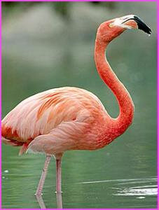 le-flamant-rose-74913_e2z