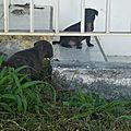 chienne squelettique 11 et ses chiots abandonnés dans le Sud Grande Terre