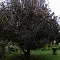 Prunus - octobre 06