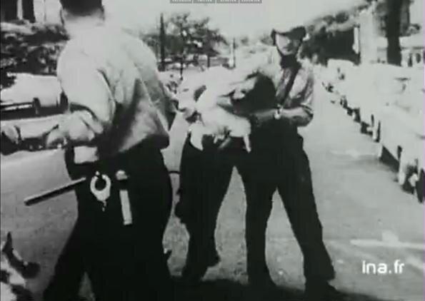 Chiens dressés pour la répression des émeutes raciales en 1968 - 3