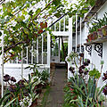 Cornwall (4). the lost gardens of heligan (2)...