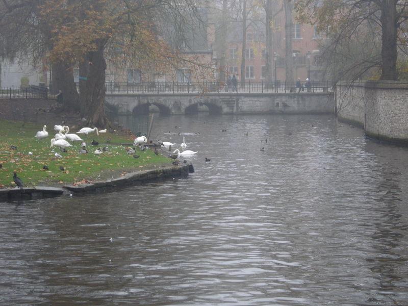 Bruges Nov 2011 132