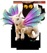 mouton-vole2