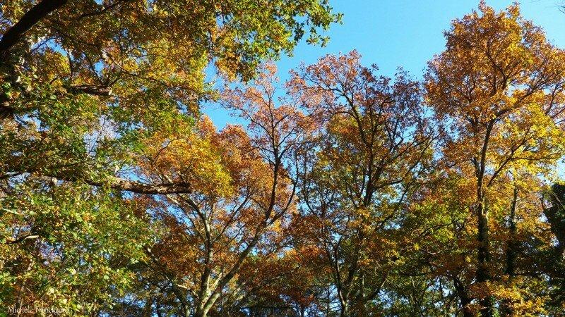 Feuillages automne 07121516