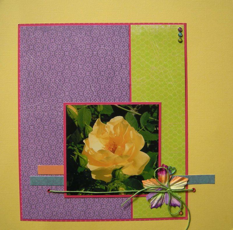 rose jaune x