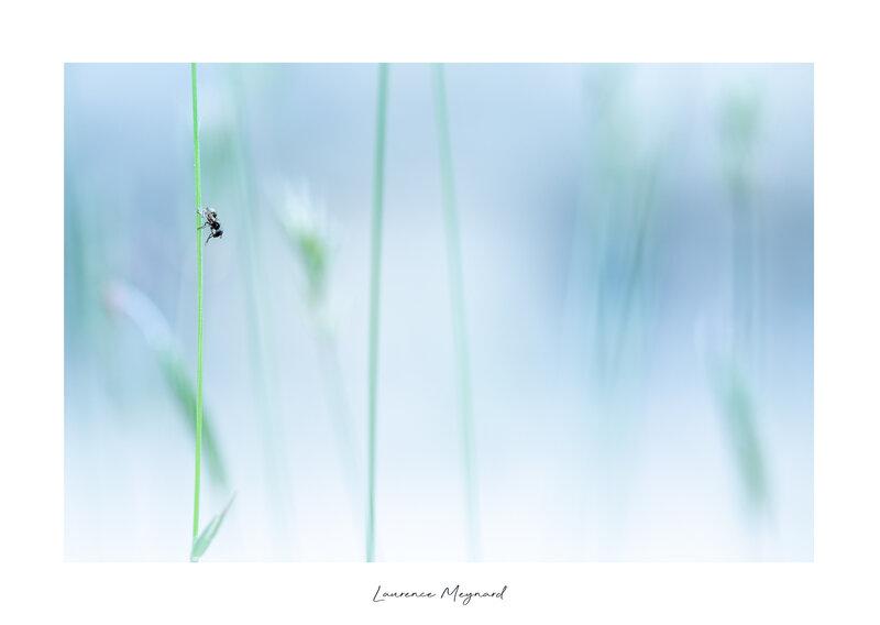 La vie en bleue des insectes