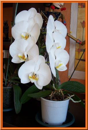 orchid1100_2343