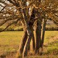 arbres fdp w (14)