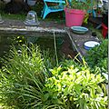 Windows-Live-Writer/jardin-charme_12604/DSCN0637_thumb