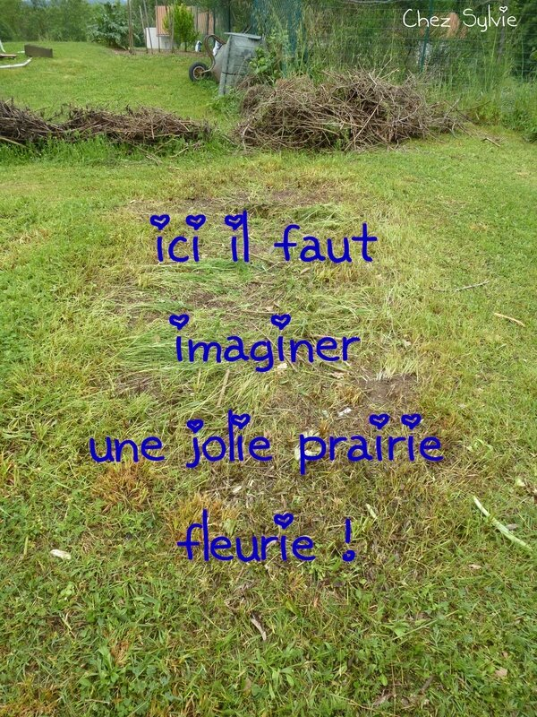 Prairie fleurie01