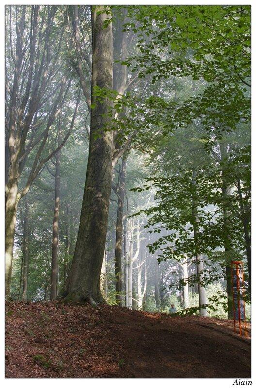 la forêt par elle-même est une oeuvre d'art !