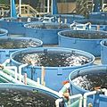 comment se lancer dans l'aquaculture