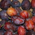 Prunes Quetsche