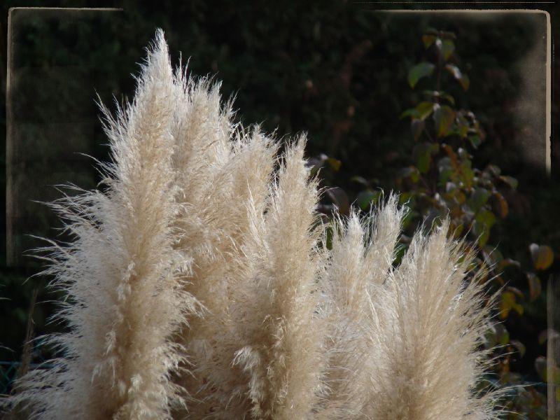 plumeaux
