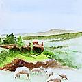 Bibi mouton du Maroc