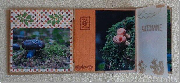 mini-champignons-(6)