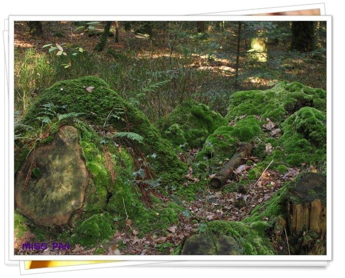 ballade en forêt (2)