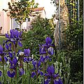 Windows-Live-Writer/jardin_6BD4/DSCF3556_thumb
