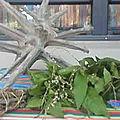 Plantes de lavage spirituel du maître tchegnon