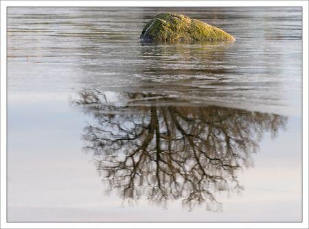gatine_olivette_rocher_reflet_arbre_glace_261209