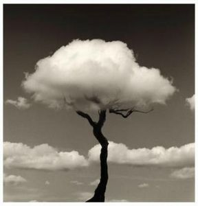 art-cloud-photography-tree-Favim