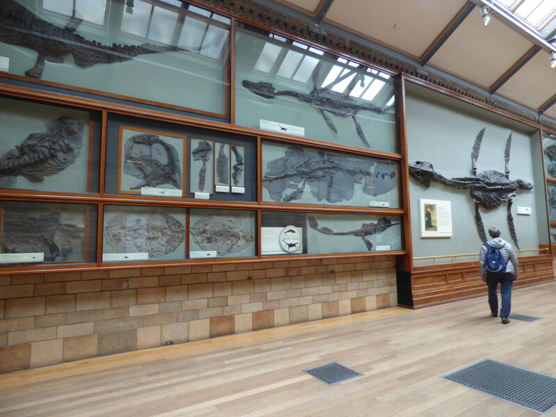 25 Londres Natural History Museum (17)