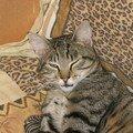 Tim la terreur mdr infernal ce chat mais qu'est ce qu'il est beau!! ;)