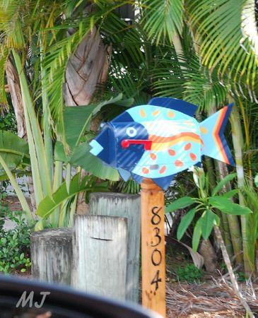 BAL FISH