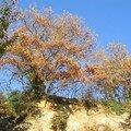 automne095