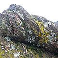 Palette de lichens