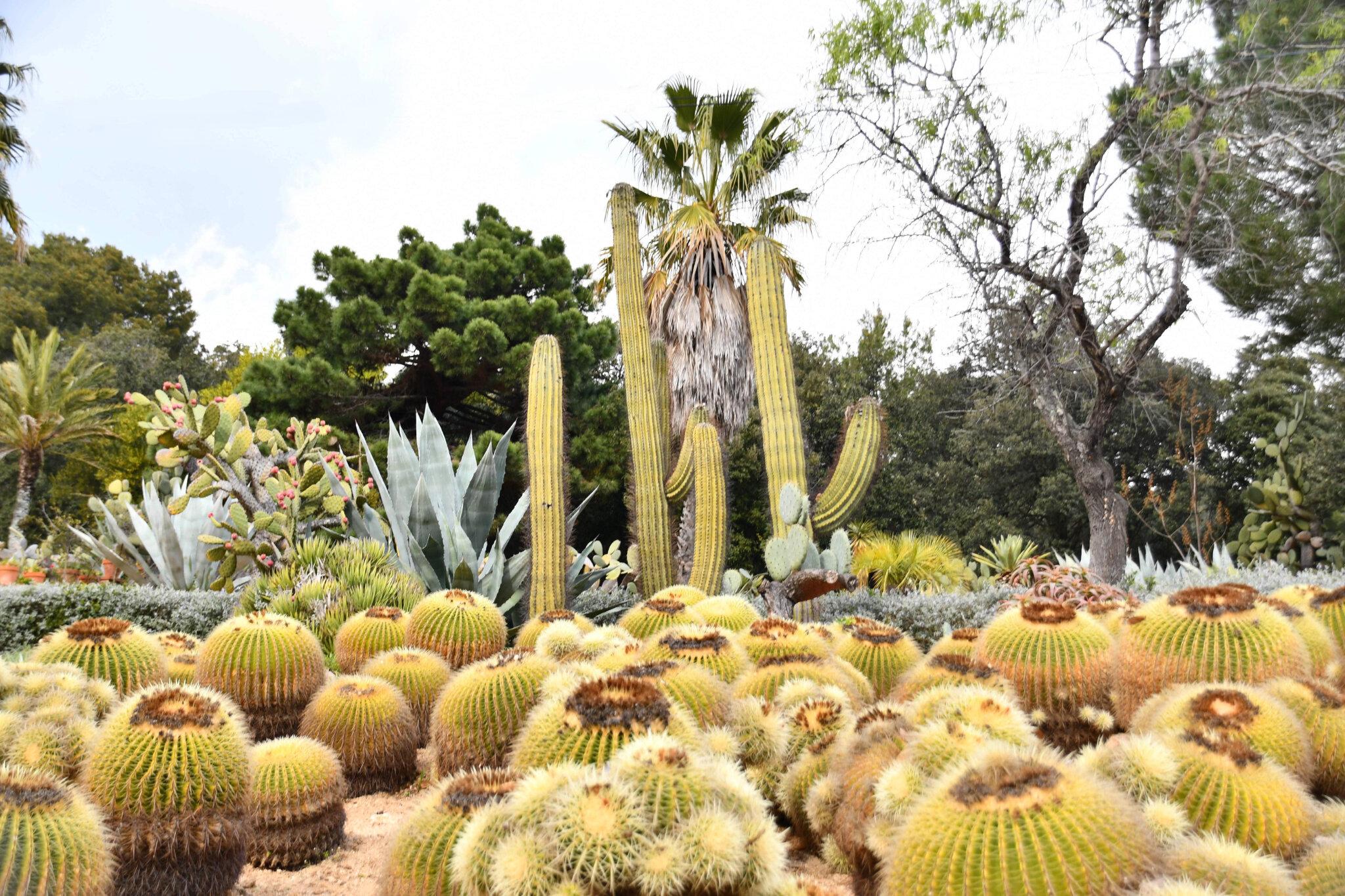 Exotique fleurs Rare semences rares jardin balcon plante honte Fleur