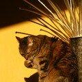 Cahouette le chat