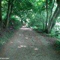 Sous bois toujours au bord du Loiret