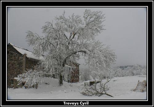 2008 12 18 Casse d'une branche de Freine