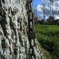 chaîne sur chêne