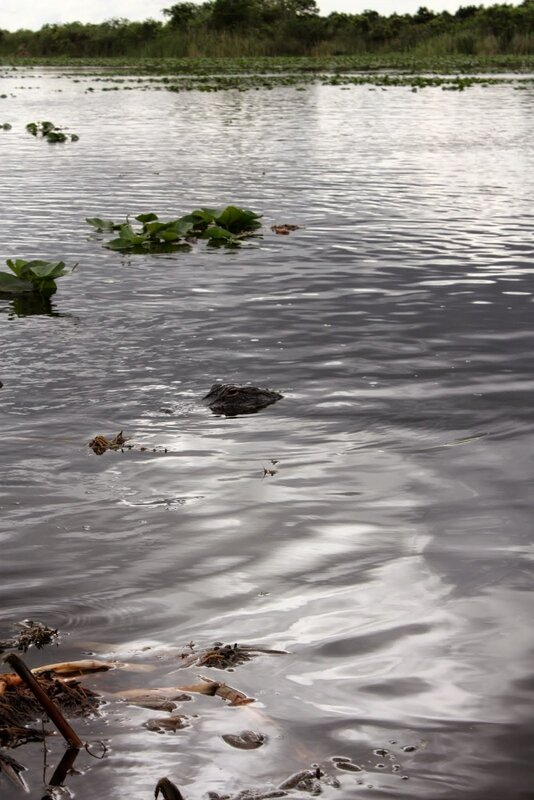 J24 - 21 juillet 2014 Everglades (121).JPG