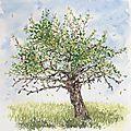 Vergers, première aquarelle d'après nature...