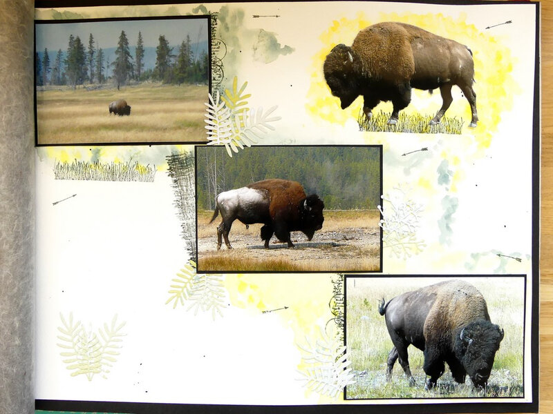 Page bisons #2 - Bisons page #2