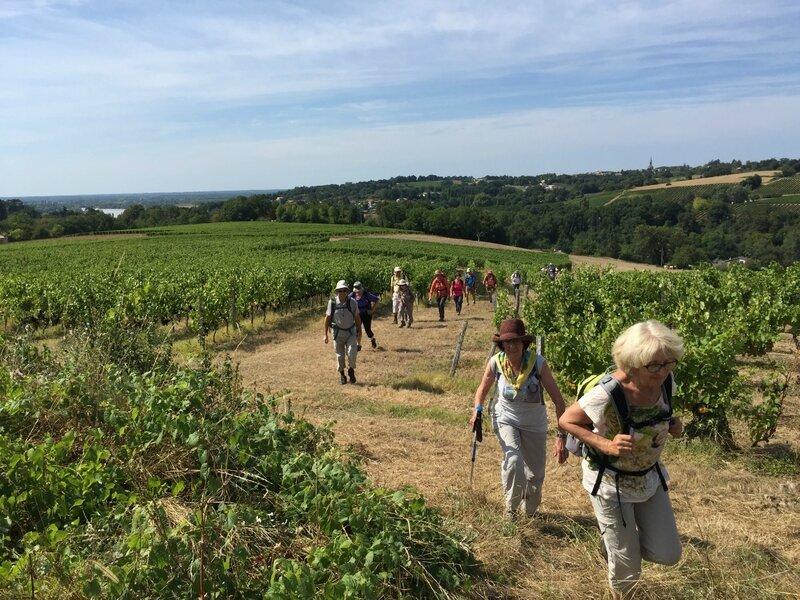 montée à travers les vignes du Sauvage