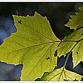 La saison des feuilles à l'envers ...