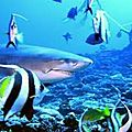 requin citron