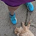 Les amis chats du quartier