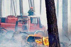 80 hectares ravagés à Luxey