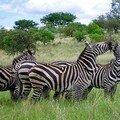 Parc National de Nechisar : Zèbres de Burchell