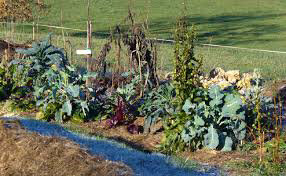 GRIFFONNADE 367 : Permaculture