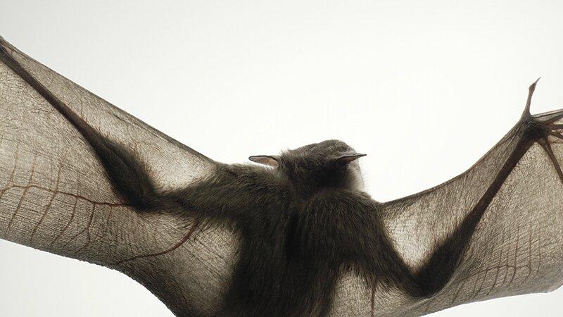 Abstract Bat 3_HeroC