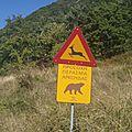 grèce proche macédoine route de montagne ours à gauche biche à droite